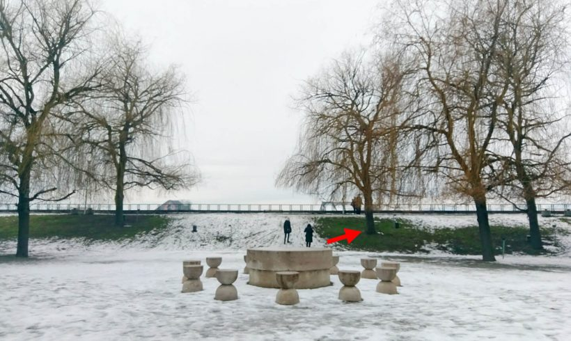 Salcie (04) – Parcul Central din Târgu Jiu