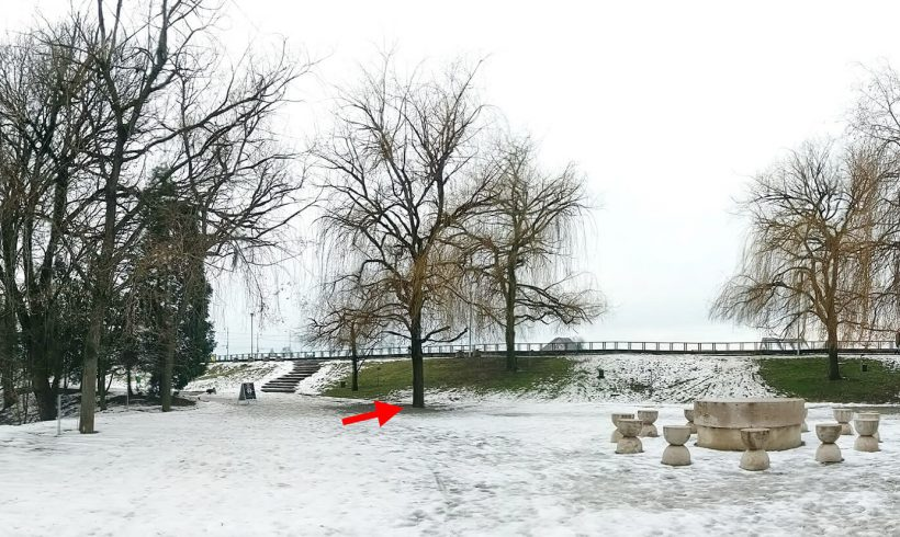 Salcie (05) – Parcul Central din Târgu Jiu