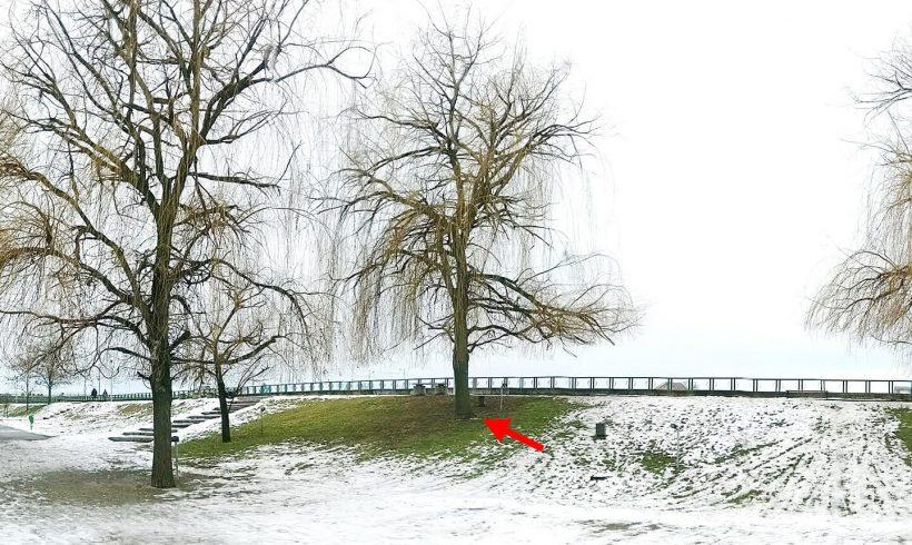Salcie (06) – Parcul Central din Târgu Jiu
